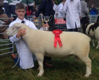 Clogher Valley Show 2017